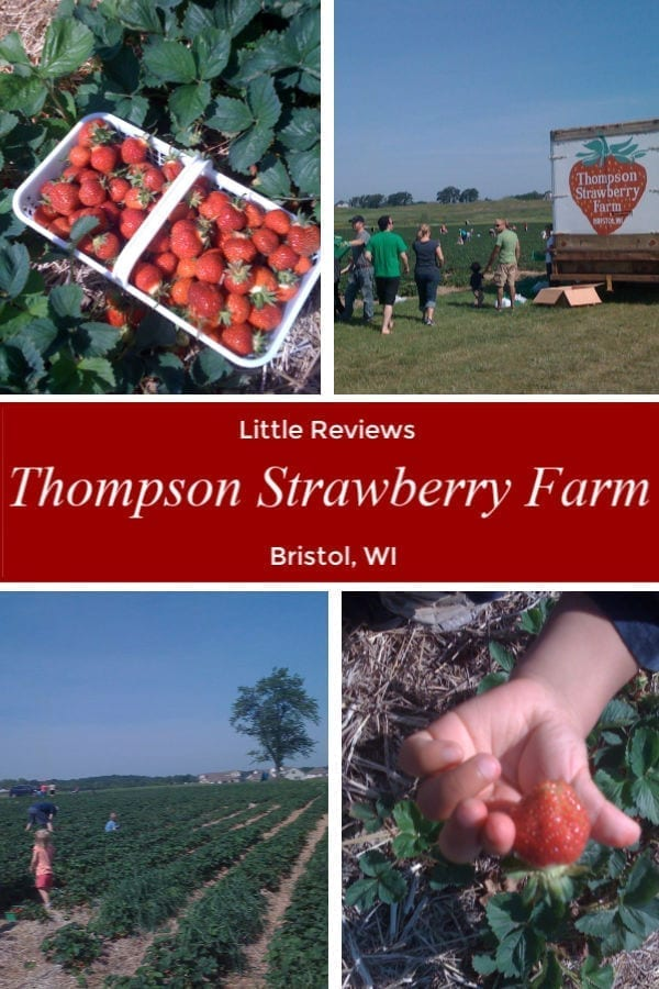 Strawberry Fields Forever at The Thompson Strawberry Farm