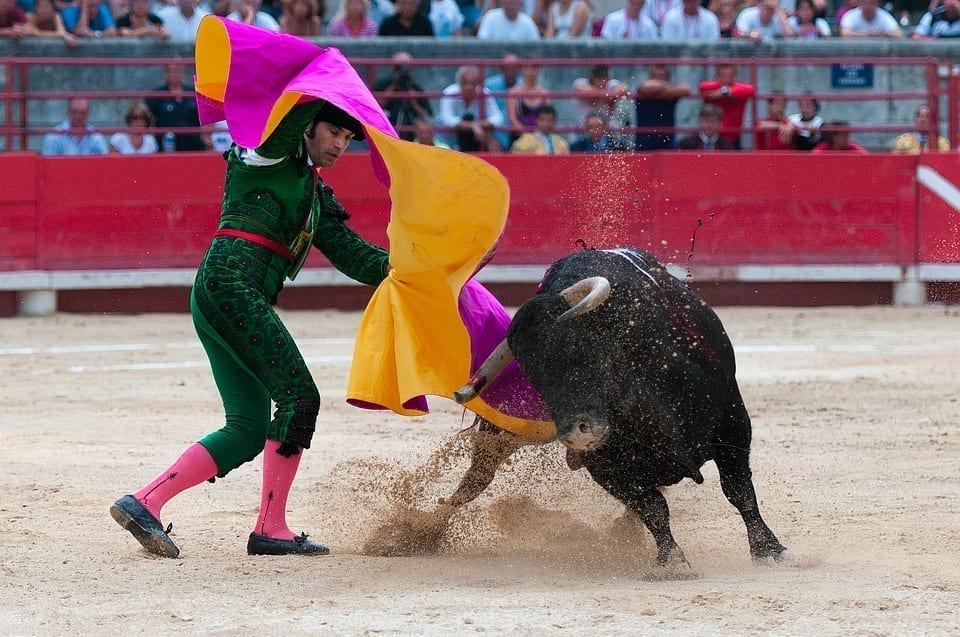 Bullfight Toreador
