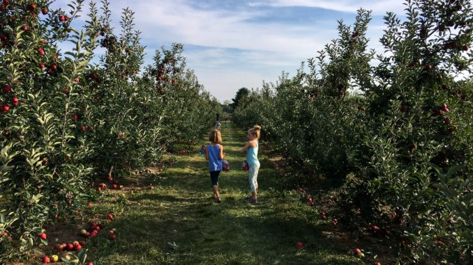 All Seasons Orchard, Woodstock