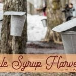 Sap it Up: Maple Syrup Festivals in and around Lake County