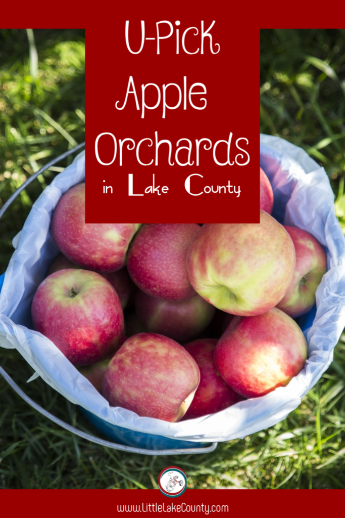 U-Pick Apple Orchards in Lake County