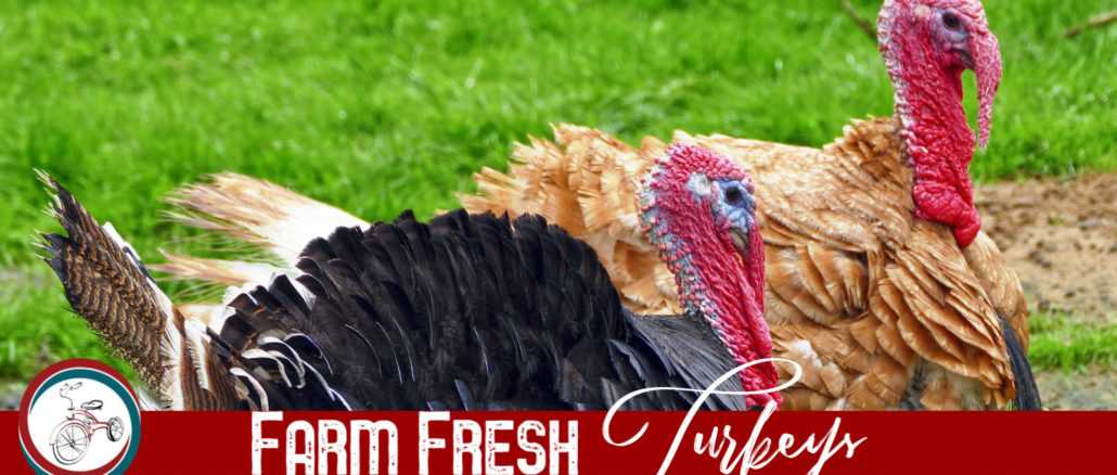 farm fresh turkeys lake county