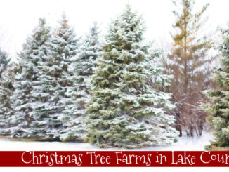 tree farms in lake county