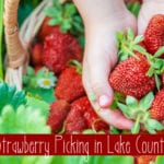 Strawberry and Berry Picking In Lake County